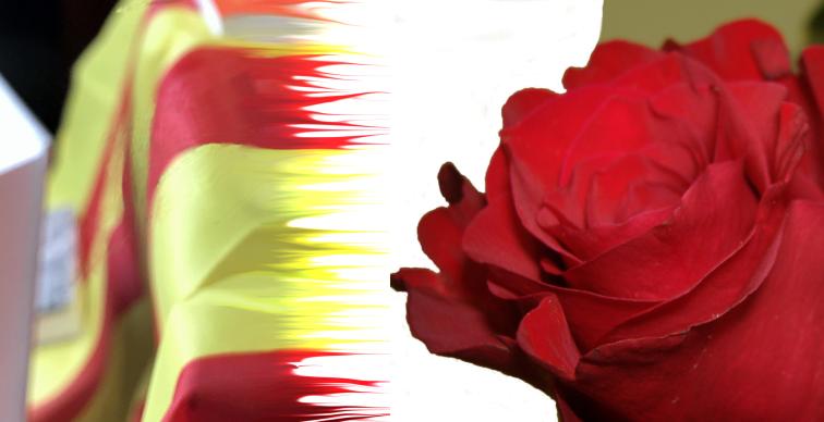 Sant Jordi 2019. Buscallà Assessoria Assegurances i Immobiliària us desitgem una molt bona diada de Sant Jordi 2019