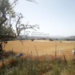 Finca rústica, casa amb hort de lloguer al Berguedà: el camp-Buscallà immobiliària-lf165