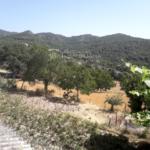 Finca rústica, casa amb hort de lloguer al Berguedà: hort -Buscallà immobiliària-lf165